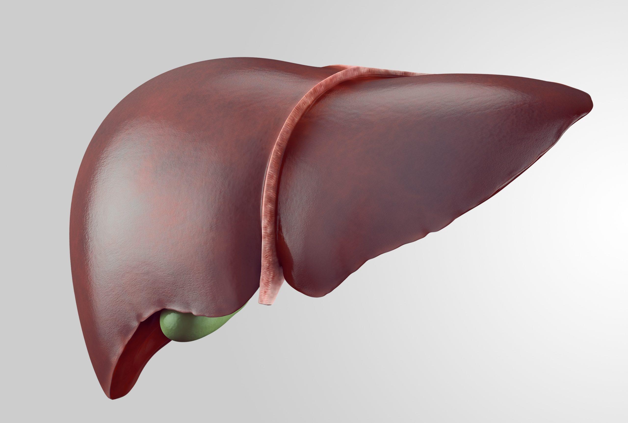 Liver Margin with Gallbladder
